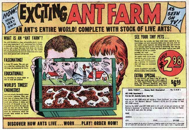 antfarm.jpg