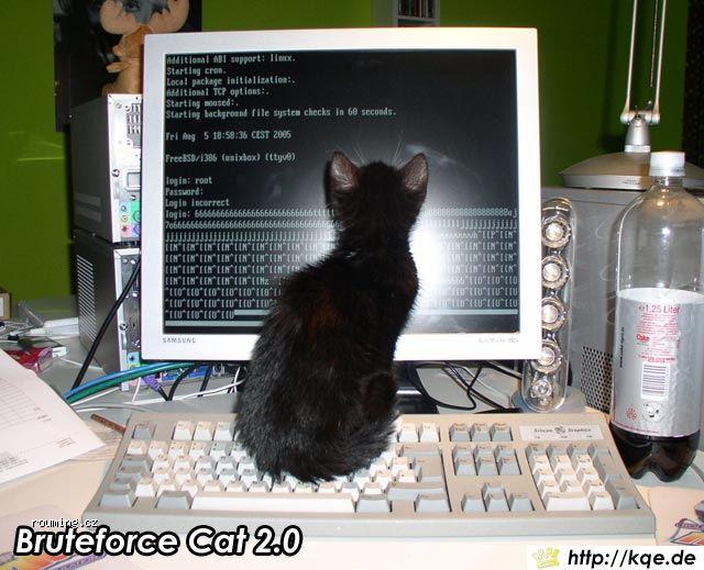 bruteforce-cat.jpg